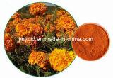 Alfa-Terthienyl vendedora caliente 0.1% del extracto de la raíz de la maravilla