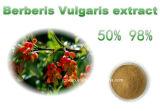 심상성 매발톱나무 루트 추출 또는 Berberis