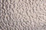 Stucco impresso dello strato/bobina