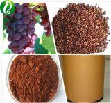 Usine Extrait de pépins de raisin d'alimentation OPC95%