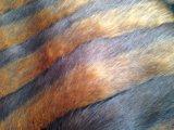 縞の二重かマルチカラージャカード人はのどの毛皮を作った