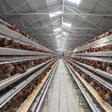 Aves de capoeira Galinha galvanizado Camada de Equipamentos Agrícolas da gaiola de frango