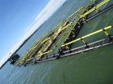 Cage de HDPE, grande capacité de cage carrée de pisciculture