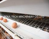 Gaiola galvanizada quente de venda quente da galinha do ovo para a criação de animais