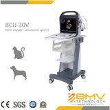 Scanner des Veterinärgeräten-medizinischer Ultraschall-Katze-Hund3d