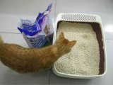 Tofu, der Staub weniger Katze-Sänfte aufhäuft