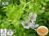 Het Natuurlijke Bacopa Monniera Uittreksel Bacopasides van 100%
