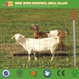 La rete fissa galvanizzata ad alta resistenza della giuntura di cerniera/ha riparato la rete fissa del nodo/rete fissa del bestiame/rete fissa della capra/rete fissa animale