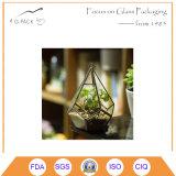 Художнический вися Terrarium диаманта Teardrop завода воздуха стеклянный геометрический