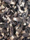 Morilles séchées organiques Morchella Champignon de haute qualité