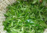 Alimentation d'usine Extrait de Thé vert Thé organique de la polyphénol L Theanine, l'EGCG, la catéchine épigallocatéchine gallate (EGCG)