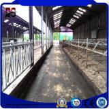 Inneren vorfabrizierten neuen Stahlrahmen für Vieh-Bauernhof-Haus leeren