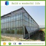 急速な構築の大きいスパンの一階建ての金属の構造の温室の建物