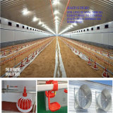 Prebabricated Poultry House mit Full Set Equipment