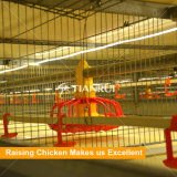 Cage automatique de ferme de poulet à rôtir à vendre à Philippines