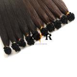 Couleur marron naturel de la cuticule tiré les cheveux brésiliens Prebonded sèche