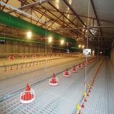 Ligne alimentante automatique pour le poulet à rôtir