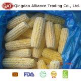 Espigas de milho doce congeladas IQF para exportar