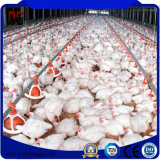Materiali da costruzione leggeri dell'installazione durevole per l'azienda agricola di pollo