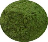 Estratto naturale dell'erba di orzo del fornitore per gli alimenti ed il supplemento