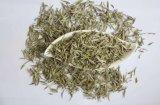 Extracto de té blanco para suplementos alimenticios y bebidas