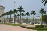 2017 высокого качества большой открытый искусственного пальмами