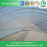Multi-Span Tomate Planting Tunnel Film Green House