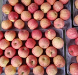 Gutes Quality oder Exporting Fresh FUJI Apple
