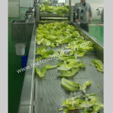 Het grote Fruit van de Bel van het Type Commerciële en Plantaardige Wasmachine