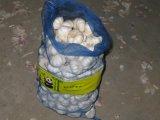 Nuovo Crop Fresh Pure White Garlic (5.5cm ed aumentano)