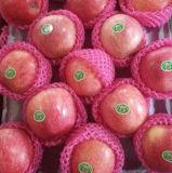 새로운 추수 신선한 빨간 Qinguan Apple의 고품질