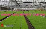 Le riz paddy pépinière Semis de graines de semis de la machine de cultiver de la machine
