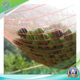 Reticolato verde della grandine della vigna anti, reti orticole di protezione della frutta