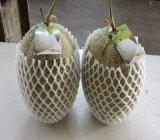 Bestes Qualitätsschaumgummi-Schutzhülle-Netz für Frucht und Wein