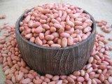A Fried & amendoins salgados com alta qualidade
