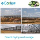 Armazenamento frio personalizado tamanho para a grande fábrica de processamento da secagem de gelo do alimento da capacidade elevada do tamanho