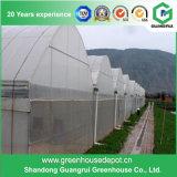 Landwirtschaft Multi-Überspannung Film-Gewächshäuser für Gemüse
