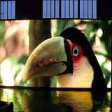 Afficheur LED P10 visuel polychrome extérieur pour annoncer l'écran