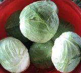 Vert frais/chou blanc