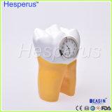 Dentista de resina Clínica Dentária artesanato artigos de mobiliário de decoração Arte Criativa Hesperus Dente Dentária