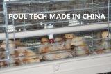 тип система клетки старого цыпленка дня рамки & малого цыпленка автоматическая для сарая цыплятины