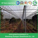 필름 식물성 설치를 위한 태양 녹색 집