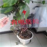 Hoja de encargo de Plycarbonate de la resistencia de la llama