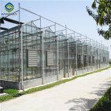 [سينبولي] متعدّد فسحة بين دعامتين زراعة زجاجيّة إلكترونيّة دفيئة