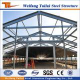 Casa de pollo de las aves de corral de la estructura de acero para el edificio