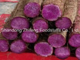 Батат 2016 натуральных продуктов свежий пурпуровый
