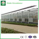Design moderno com efeito de vidro de Venlo span único para a agricultura