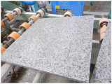 Slabsのための製造業者のPriceのCS White Granite