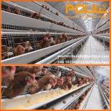 دجاجة أقفاص لأنّ شواء فرخة طبقة في دواجن منزل مع مزرعة بناء