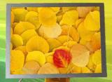 """"""" étalage du TFT LCD 8, écran de TFT avec la surface adjacente de RVB :"""